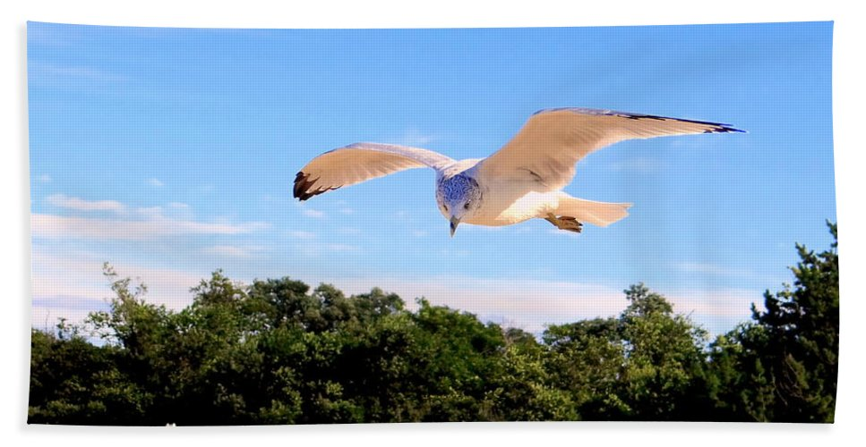 Nature Beach Towel featuring the photograph Frequent Flyer by Ed Weidman