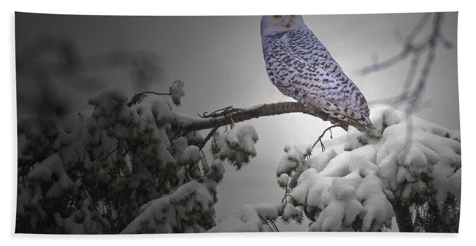Snow Owl Beach Towel featuring the photograph Fresh Snow by Rob Mclean