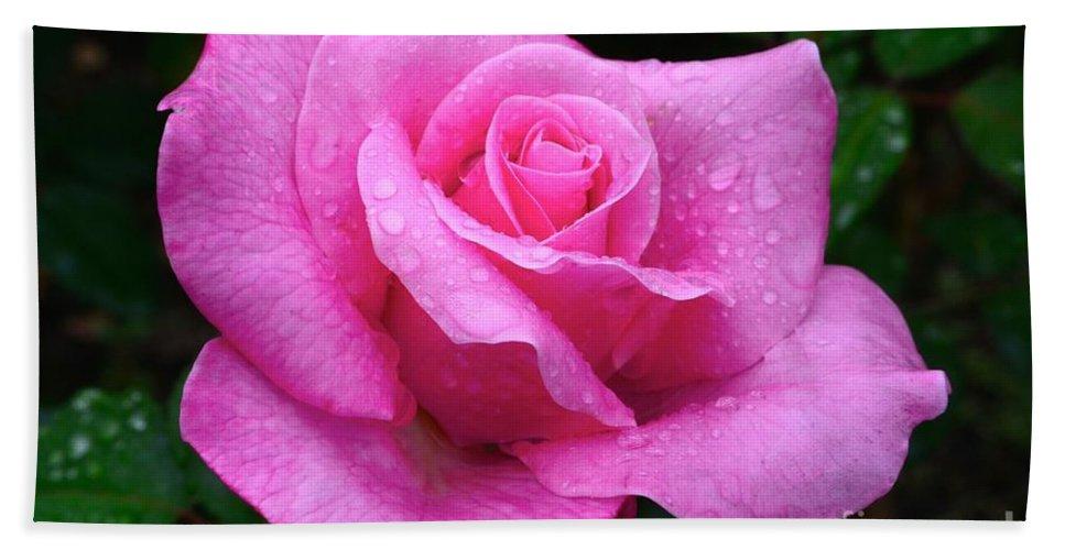 Fresh Sweet Surrender Rose Beach Towel featuring the photograph Fresh Sweet Surrender Rose by Jeannie Rhode