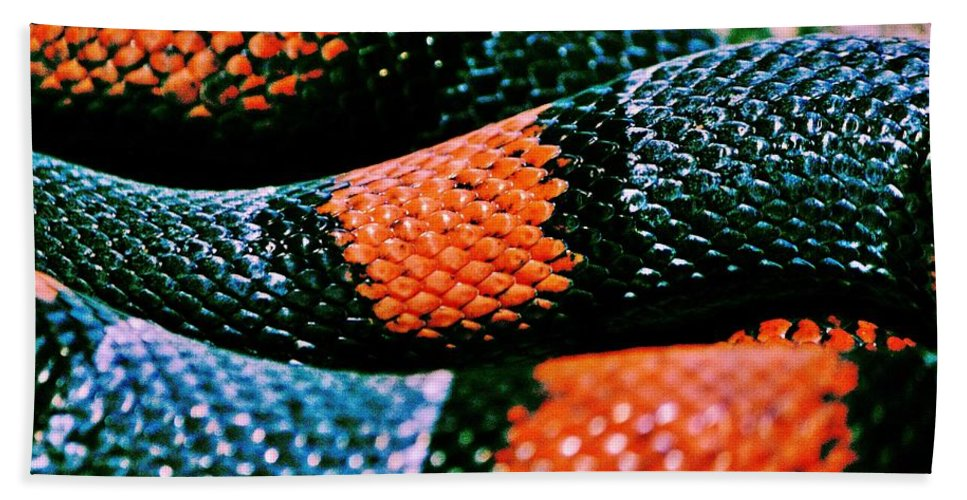 Milk Snake Beach Towel featuring the photograph Friend Of Jack by Benjamin Yeager