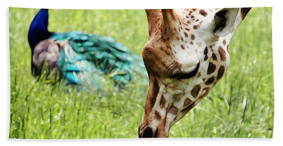 Giraffe Beach Towel featuring the photograph Friendship by Nishanth Gopinathan