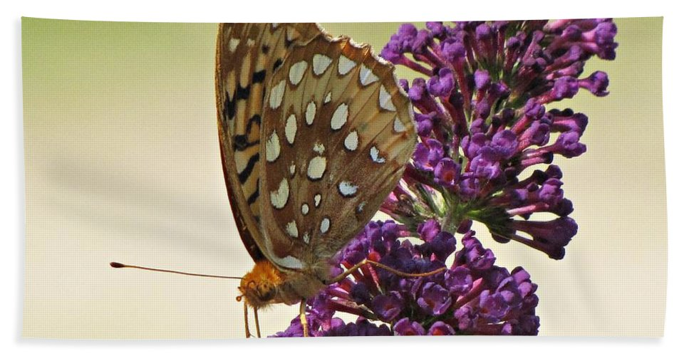Butterfly Beach Towel featuring the photograph Fritillary Butterfly On Buddleia by MTBobbins Photography