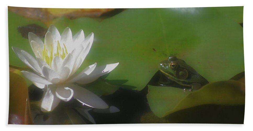 Nature Beach Towel featuring the photograph Frog And Water Lily by Smilin Eyes Treasures