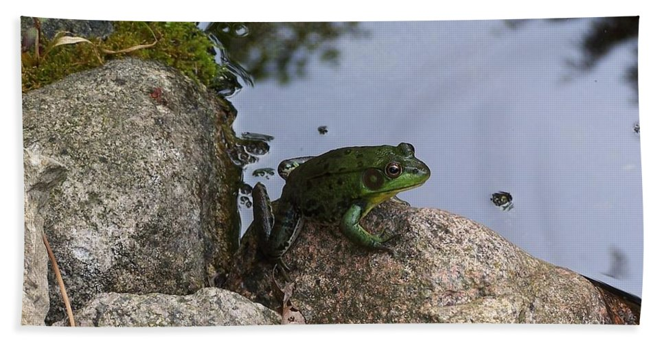 Frogs Beach Towel featuring the photograph Frog At Edge Of Pond by Holly Eads