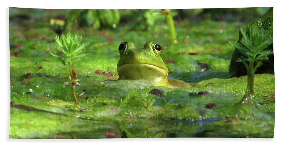 Frog Beach Towel featuring the photograph Frog by Douglas Stucky