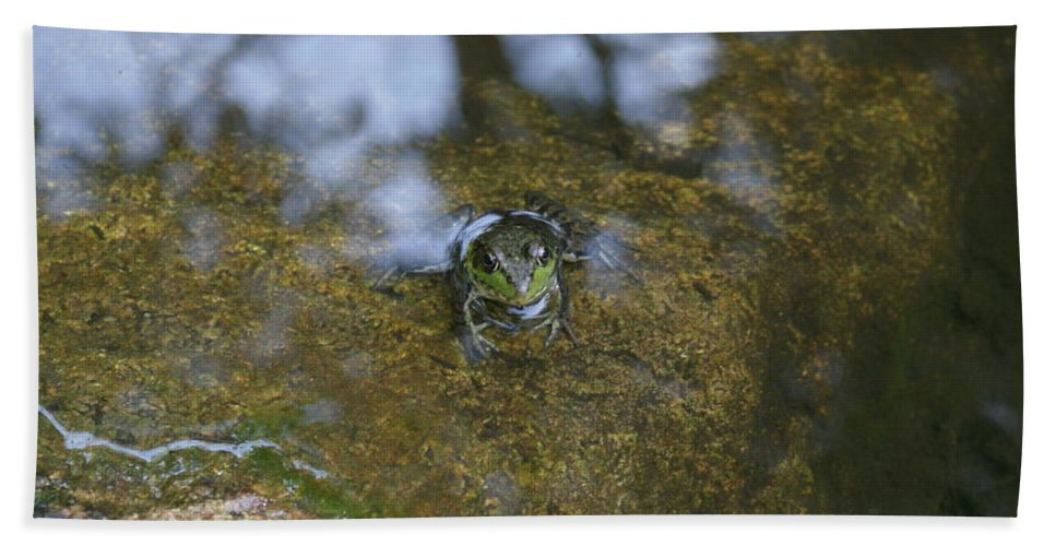 Frogs Beach Towel featuring the photograph Frog In A Pond by Holly Eads