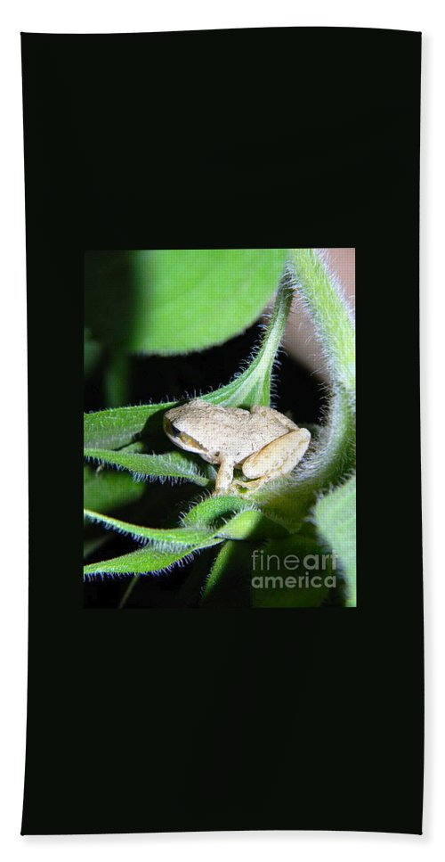 Frog Beach Towel featuring the photograph Frog In The Garden by Sara Gravely- Comstock