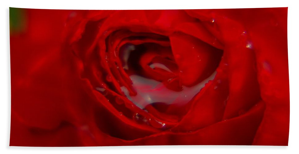 Roses Beach Towel featuring the photograph From A Kiss Of Rain by Jeff Swan