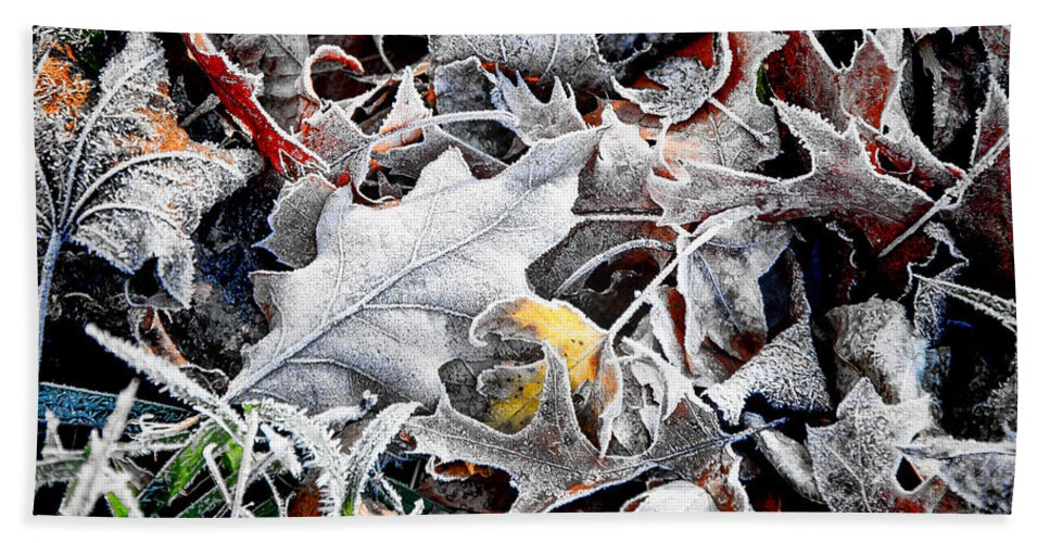 Carol Stream Beach Towel featuring the photograph Frost On Leaves 1 by Marc Miller