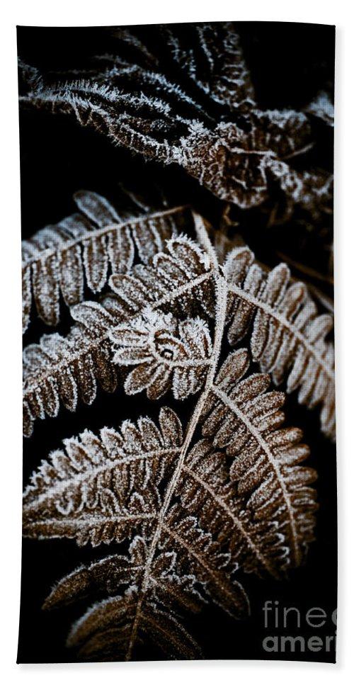 Beauty In Nature Beach Towel featuring the photograph Frozen Fern by Venetta Archer