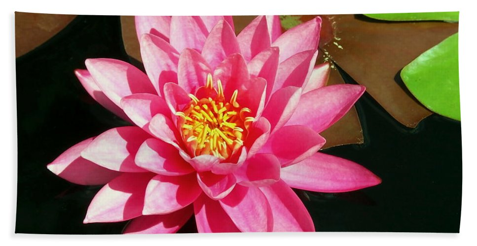 Nature Beach Towel featuring the photograph Fuchsia Pink Water Lilly Flower Floating In Pond by Amy McDaniel