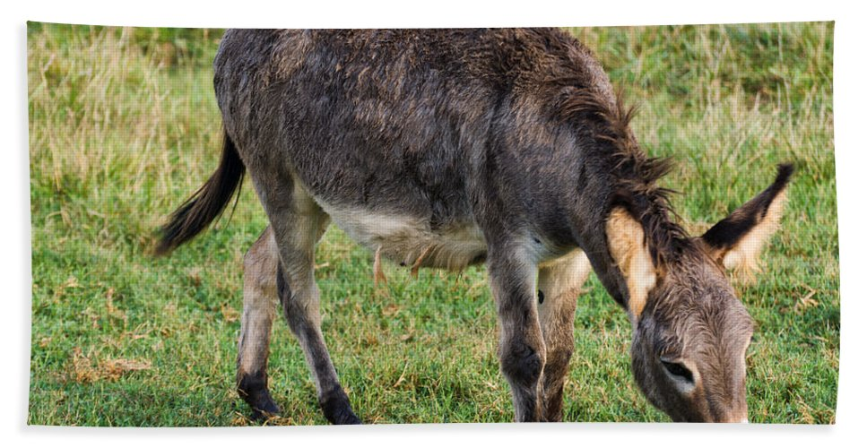 Donkey Beach Towel featuring the photograph Full Grown Donkey Grazing by Chris Flees