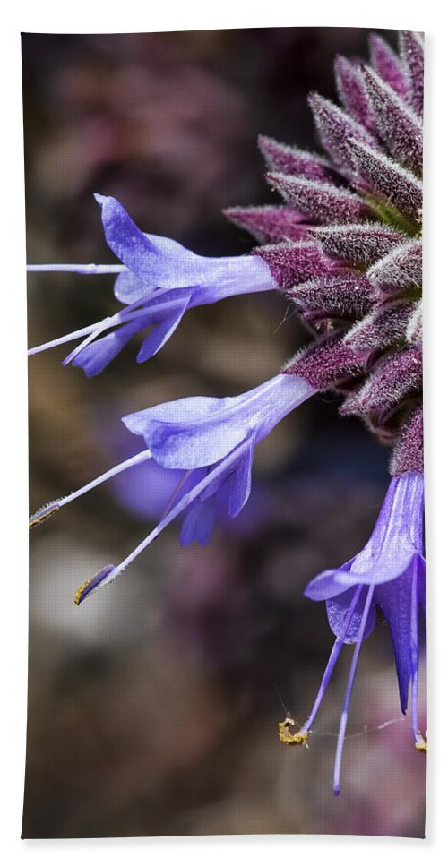 Purple Flowers Beach Towel featuring the photograph Fuzzy Purple Detail 1 by Kelley King