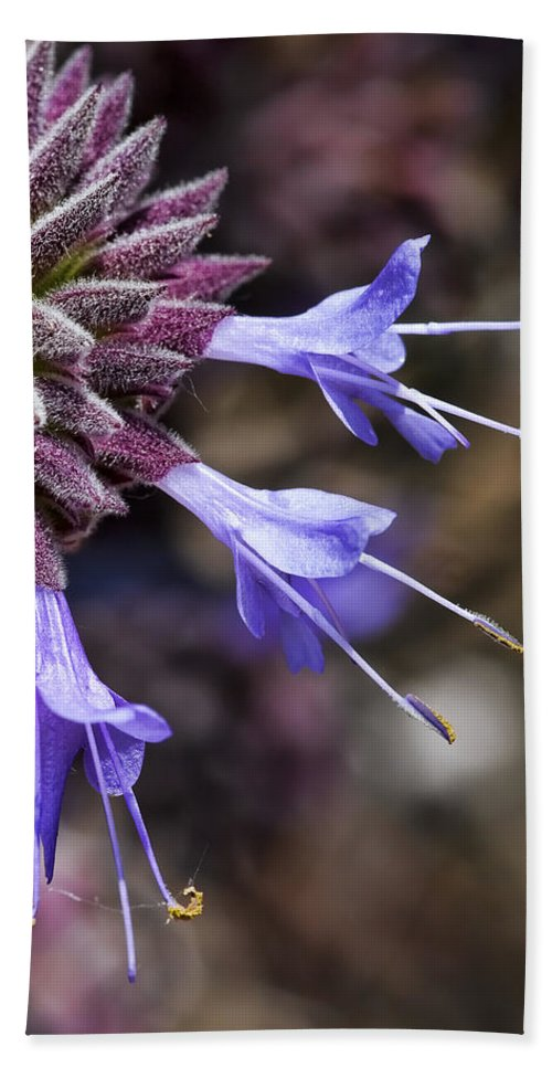 Macro Flowers Beach Towel featuring the photograph Fuzzy Purple Detail 2 by Kelley King