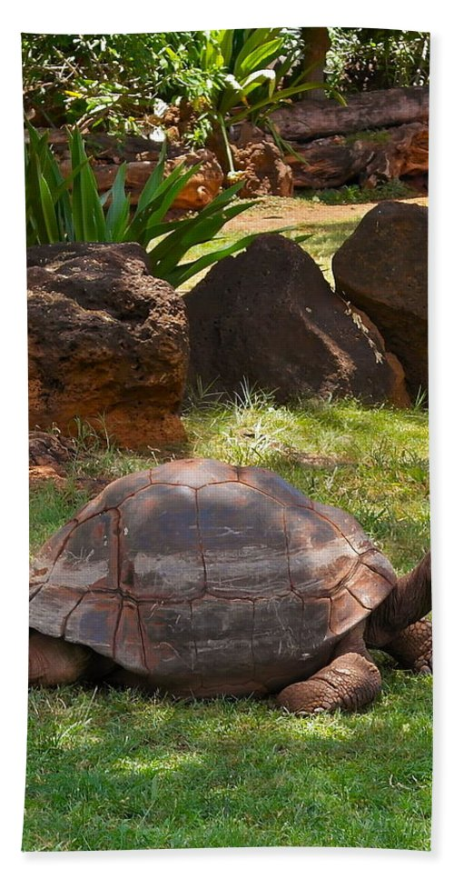 Galapagos Turtle Beach Towel featuring the photograph Galapagos Turtle At Honolulu Zoo by Michele Myers