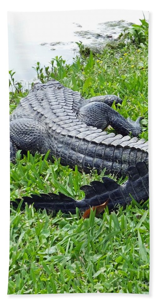 Avery Island Beach Towel featuring the photograph Gator In The Grass by Lizi Beard-Ward