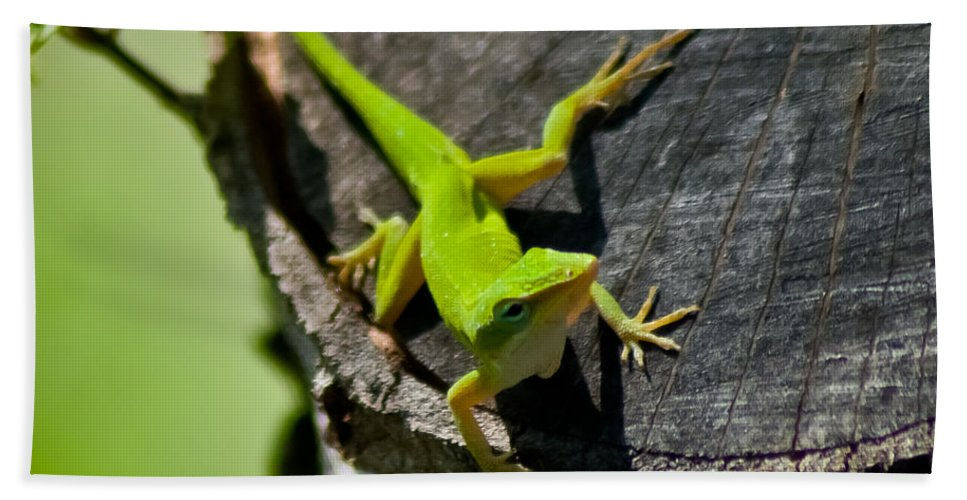 Lime Green Beach Towel featuring the photograph Gecko by Stephen Whalen