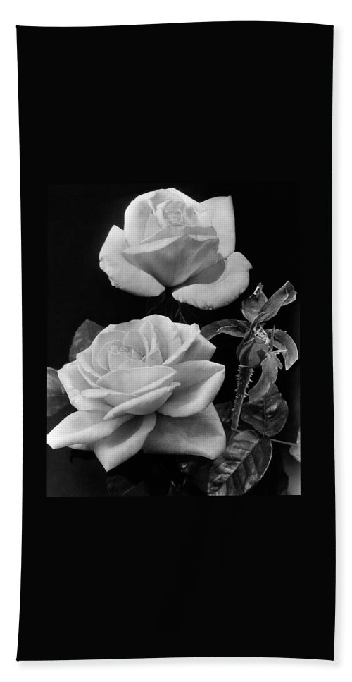 'george Arends' Roses Beach Towel