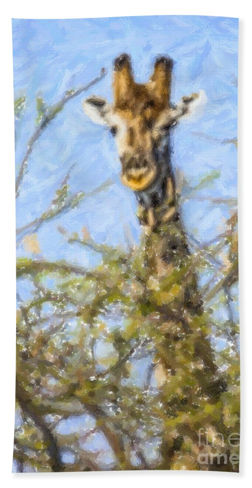 Giraffe Beach Towel featuring the digital art Giraffe Giraffa Camelopardalis Peeping From Acacia by Liz Leyden