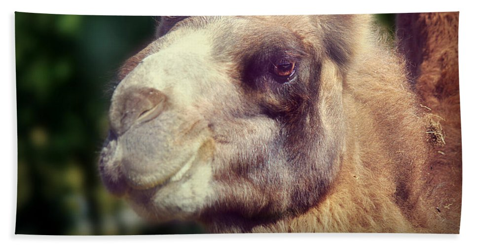 Camel Beach Towel featuring the photograph Give Me A Kiss by Melanie Lankford Photography