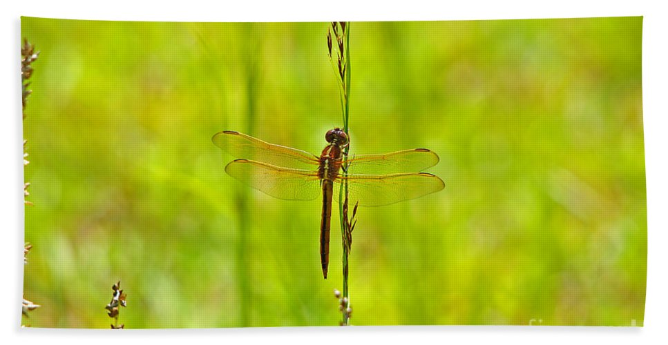 Dragonfly Beach Towel featuring the photograph Glorious Golden-winged by Al Powell Photography USA