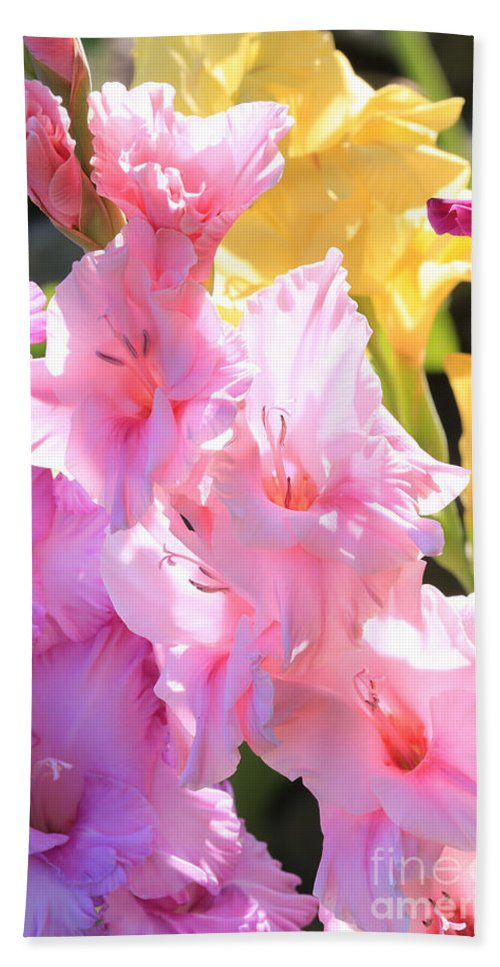 Gladiolus Beach Towel featuring the photograph Glorious Summer Gladiolus by Carol Groenen