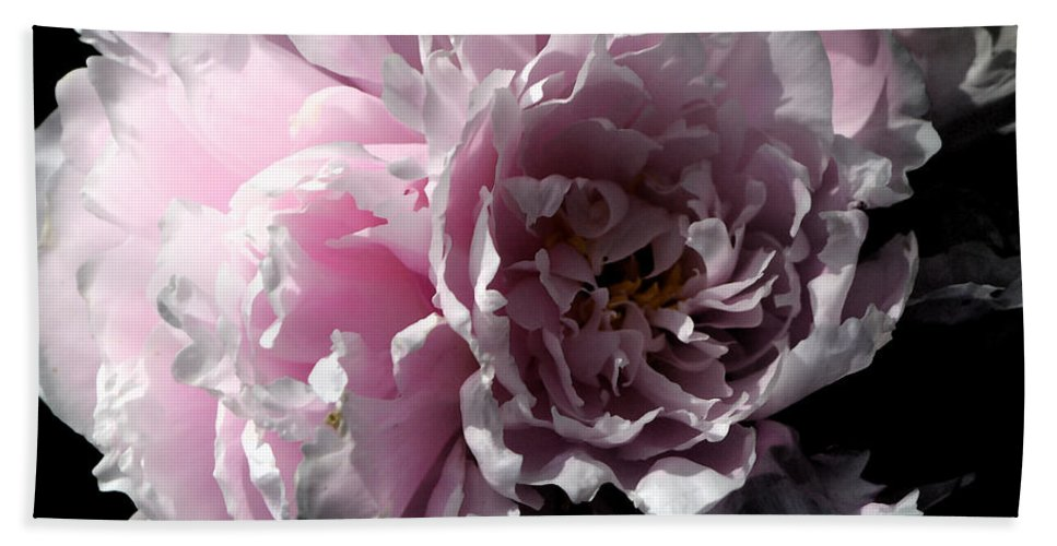 Peony Beach Towel featuring the photograph Glowing Pink Peony by Christiane Schulze Art And Photography
