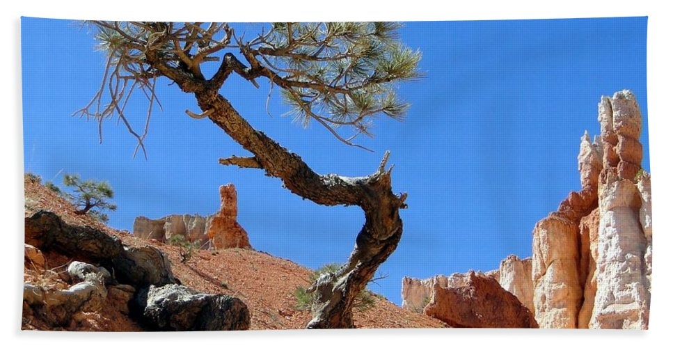 Pine Beach Towel featuring the photograph Gnarled Pine In Bryce Canyon Utah by Barbie Corbett-Newmin