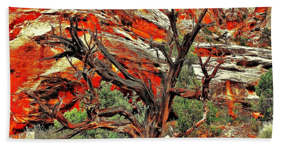 Desert Beach Towel featuring the photograph Gnarly by Benjamin Yeager