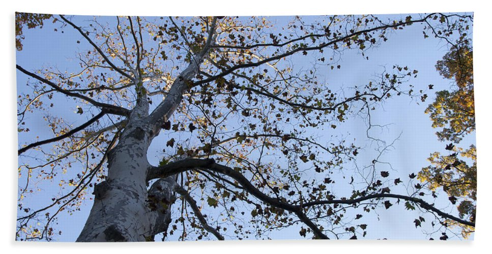 Go Climb A Tree Beach Towel featuring the photograph Go Climb A Tree by Bill Cannon