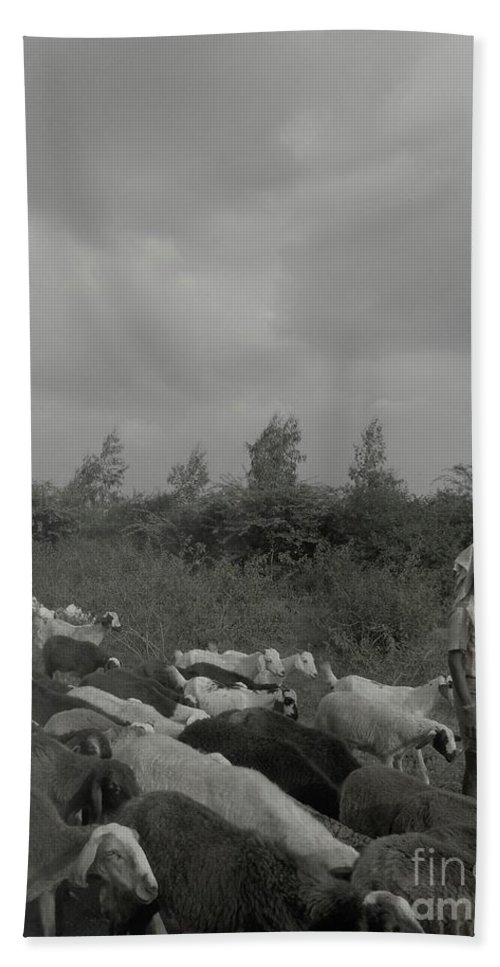 Goats Beach Towel featuring the photograph Goatherd's Delight by Mini Arora