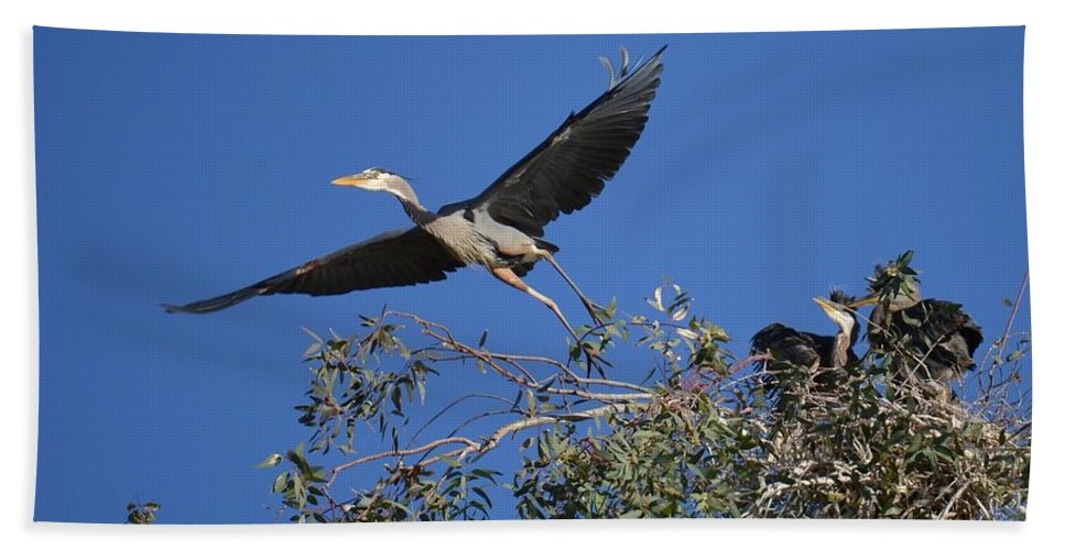 Great Blue Heron Beach Towel featuring the photograph Going For Takeout by Deb Halloran