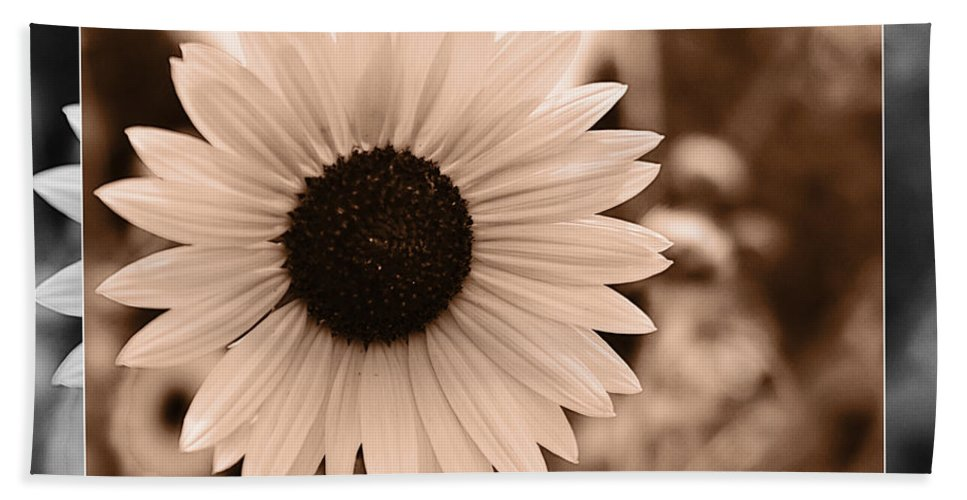 Gold Tone Beach Towel featuring the photograph Gold Tone Sunflower by Walter Herrit