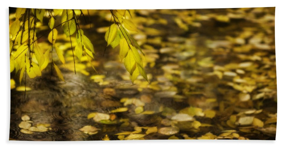 Karya Park Toronto Beach Towel featuring the photograph Golden Autumn Colour Foliage On Rainy Pond by Peter v Quenter