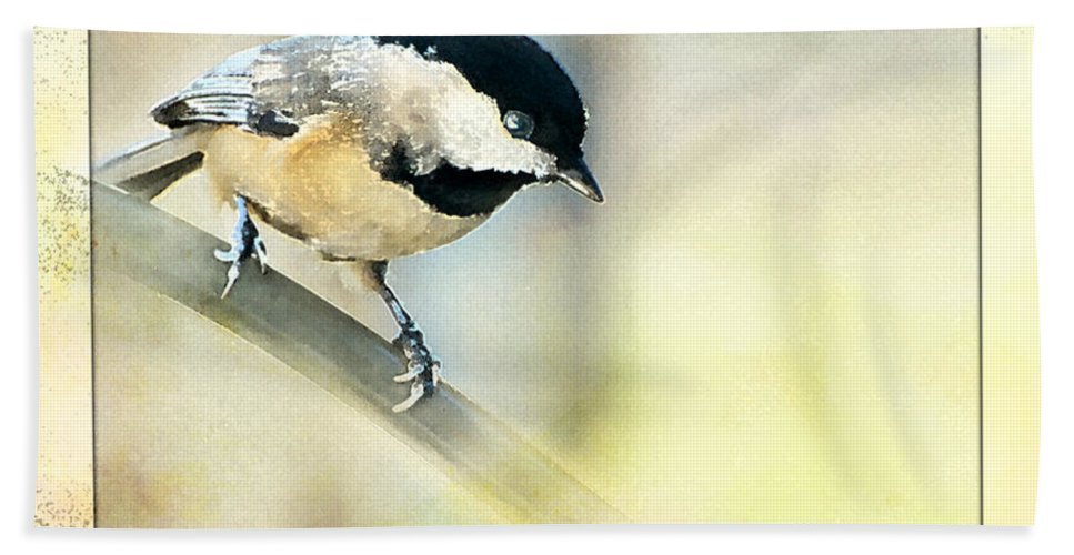 Nature Beach Towel featuring the photograph Golden Morning Chickadee Photo Art by Debbie Portwood