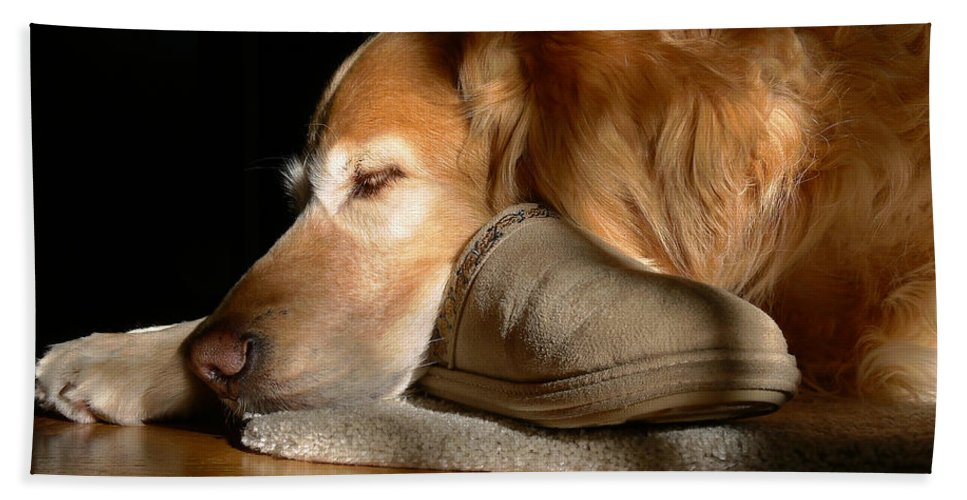 Golden Retriever Beach Towel featuring the photograph Golden Retriever Dog With Master's Slipper by Jennie Marie Schell