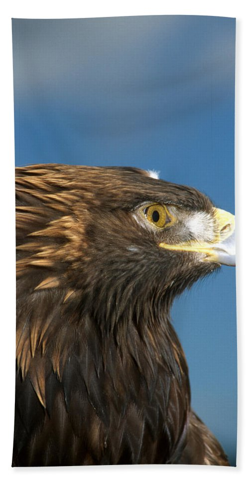Eagle Beach Towel featuring the photograph Golden Strength by Larry Allan