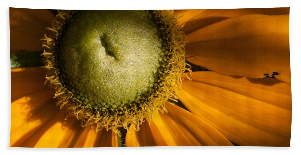 New England Beach Towel featuring the photograph Golden Sunflower by Jeff Folger