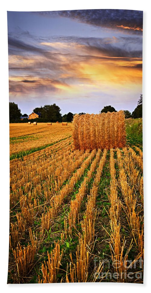 Farm Beach Towel featuring the photograph Golden Sunset Over Farm Field In Ontario by Elena Elisseeva