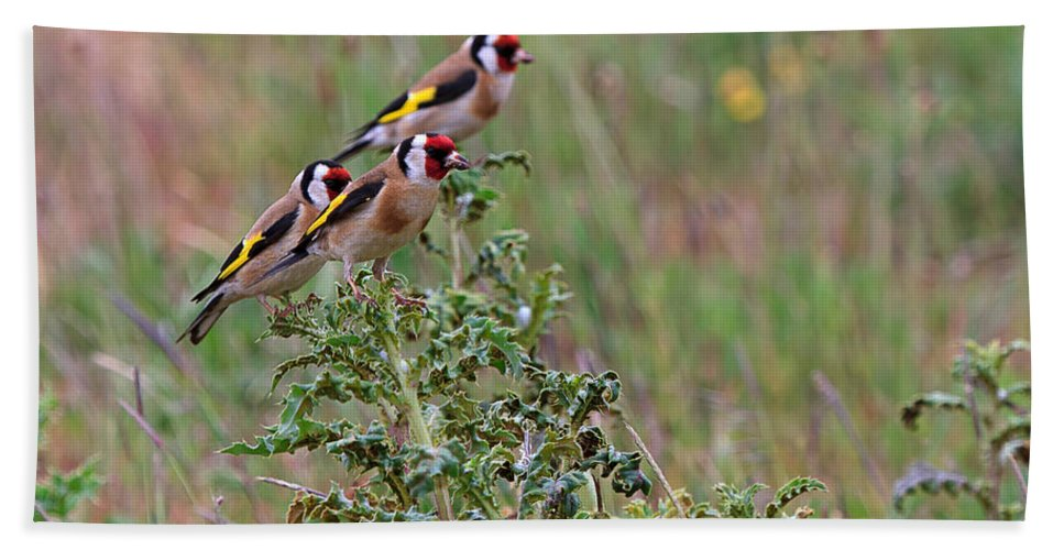 Goldfinch Beach Towel featuring the photograph Goldfinches by Louise Heusinkveld