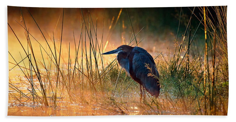 Heron Beach Towel featuring the photograph Goliath Heron With Sunrise Over Misty River by Johan Swanepoel