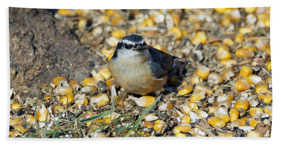 Nuthatch Beach Towel featuring the photograph Got Food by Lori Tordsen