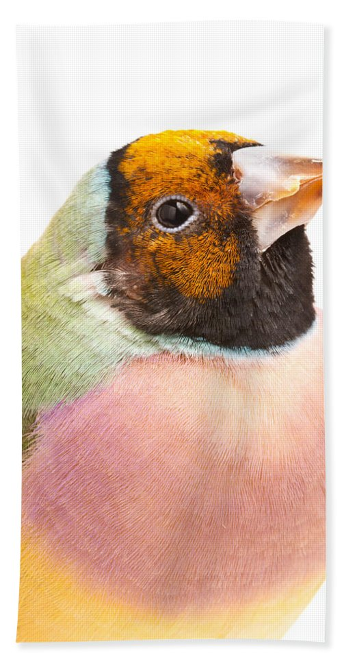 Animal Beach Sheet featuring the photograph Gouldian Finch Erythrura Gouldiae by David Kenny