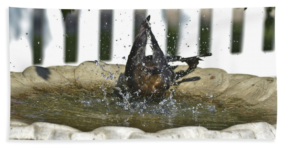Grackle Beach Towel featuring the photograph Grackle In The Bird Bath 3 by Allen Sheffield