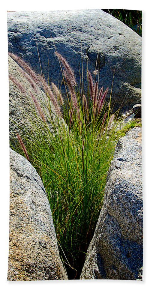 Grasses In Oasis On Borrego Palm Canyon Trail In Anza-borrego Desert Sp Beach Towel featuring the photograph Grasses In Oasis On Borrego Palm Canyon Trail In Anza-borrego Desert Sp-ca by Ruth Hager