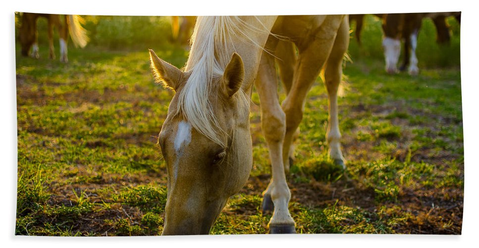 Horse Beach Towel featuring the photograph Grazing At Sunset by David Morefield