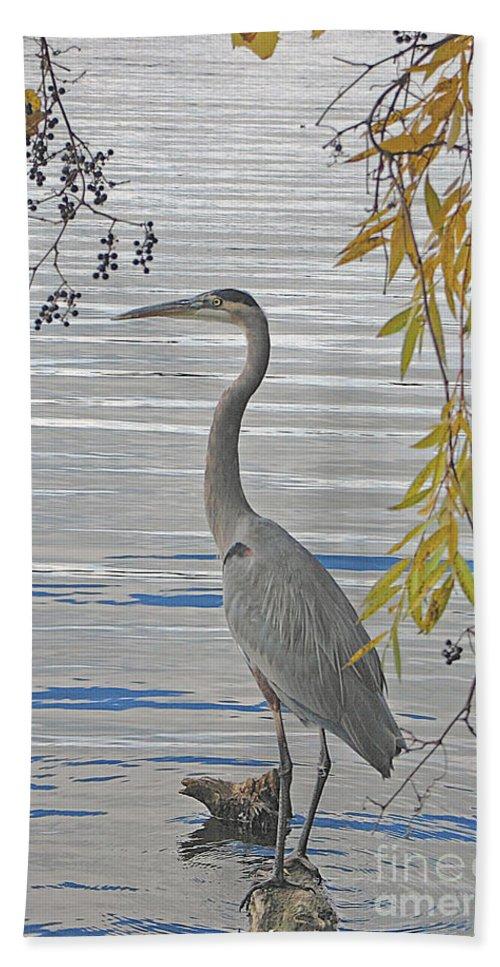 Heron Beach Sheet featuring the photograph Great Blue Heron by Ann Horn