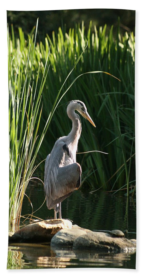 Great Blue Heron Beach Towel featuring the photograph Great Blue Heron by Ellen Henneke