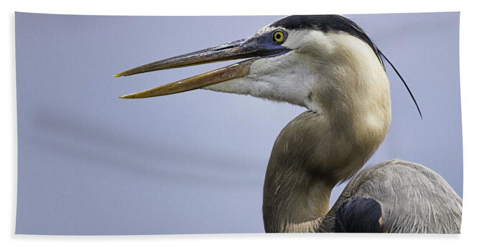 Florida Beach Towel featuring the photograph Great Blue Heron by Fran Gallogly