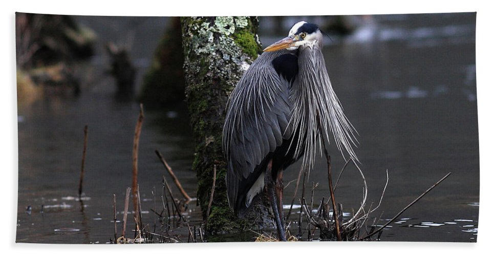 Heron Beach Towel featuring the photograph Great Blue Heron On The Clinch River by Douglas Stucky